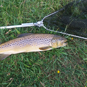 Two nice brown trouts taken by Gerry on 21st and 22nd of July on a suspender buzzer and returned to fight another day.
